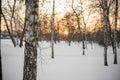 Winter. Sunset. Snow. Birches. Royalty Free Stock Photo