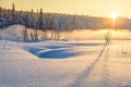 Winter sunset in snowy forest with beautiful misty fog Royalty Free Stock Photo