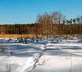 Winter swamp transition mire winter scenery Royalty Free Stock Images