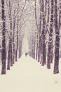 Winter tree alley Royalty Free Stock Photo