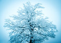 Winter tree on the blue sky Royalty Free Stock Images