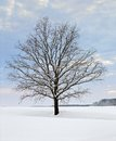 Winter tree at evening time idyllic rural scenery with stand alone in hohenlohe an area in southern germany Stock Photo