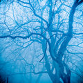 Winter tree in fog Royalty Free Stock Image