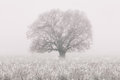 Winter tree in the fog loneliness concept Stock Image