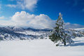 Winter tree frozen in mountains Stock Images