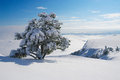 Winter tree frozen in mountains Royalty Free Stock Images
