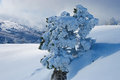 Winter tree frozen in mountains Stock Photography