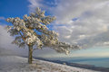 Winter tree frozen pine in mountains Stock Photos
