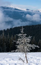 Winter tree in mountains covered with frost Royalty Free Stock Image