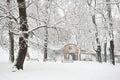 Winter Tree Park Royalty Free Stock Photo
