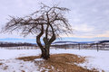 Winter Tree in Snowy Field Virginia Piedmont Stock Image