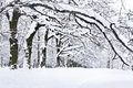 Winter trees covered with snow in the forest Stock Image