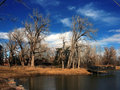 Winter Trees with lake and sky Stock Images