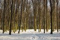 Winter trees with moss forest of Stock Photo