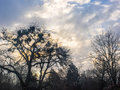 Winter trees silhouetted against sunrise through clouds barren are a with white puffy in a blue sky Stock Images