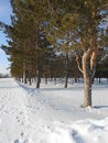 A winter view in the park with lot of snow Royalty Free Stock Image
