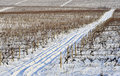 Winter vineyard Stock Image