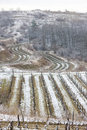 Winter vineyards Stock Photography