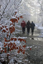Winter walk depicting cold and colour bursting through Royalty Free Stock Photos