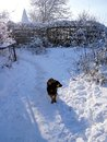 Winter walk of a yellow dog, winter color Royalty Free Stock Photo