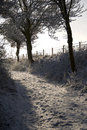 Winter walks in down a snow covered lane. Royalty Free Stock Photos