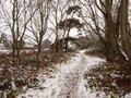 winter walkway path through forest snow covered floor trees Royalty Free Stock Photo