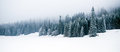 Winter white forest with snow, Christmas background Royalty Free Stock Photo