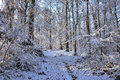 winter white forrest Royalty Free Stock Photo