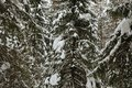Winter in the wildwood