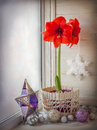 Winter window with a red hippeastrum on the eve of advent christmas decoration Royalty Free Stock Photography