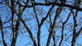 Winter withered blue sky beautiful sky Stock Images