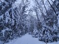 Winter Wonder Land in the forest Royalty Free Stock Photo