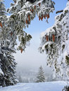Winter wonderland snowy forest glade in the mountains austrian landscape Royalty Free Stock Image