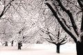 Winter Wonderland V Royalty Free Stock Images