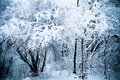 Winter wood Stock Photography