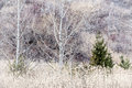 Winter woodland background nature landscape of bare trees and grasses in ravine Royalty Free Stock Images
