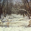 Winter woodland stream vista on a snow covered in minnesota Royalty Free Stock Photos