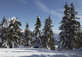Winterlandscape a winter landscape with pine trees and snow shot in south tyrol alto adige in italy up on a mountain called monte Royalty Free Stock Image