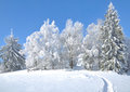 Wintertime in Bavarian Forest,Bavaria,Germany Royalty Free Stock Photo
