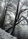 Wintertime lake liepnitzsee in winter germany Royalty Free Stock Photos