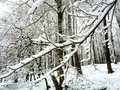 Wintertime wood in winter germany Royalty Free Stock Image