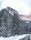 Wintery snowcovered mountain road with white snowy spruces and rocks. Wonderful wintry landscape. Travel background. Royalty Free Stock Photo