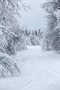 Wintry countryside road and hoar frost on trees in winter focus at the distance Stock Photography