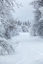 Wintry countryside road and hoar frost on trees in winter focus at the foreground Stock Images
