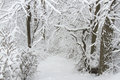 Wintry forest scene into a lane after a heavy wet snowfall Stock Photo