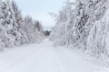 Wintry road and snow covered branches of trees in winter Royalty Free Stock Photography