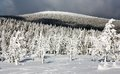 Wintry view of snowy forest on mountain Royalty Free Stock Photo