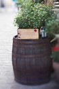 Winy barrel with a table on background a municipal street Stock Image