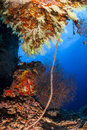 Wiped coral and yellow soft coral in fotteyo dive site in maldives Stock Photo