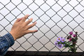 Wire fence holding hands and background have entered the flower the human hand Royalty Free Stock Photography